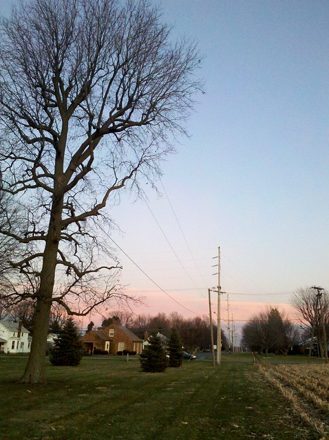 Upper Sandusky - tree