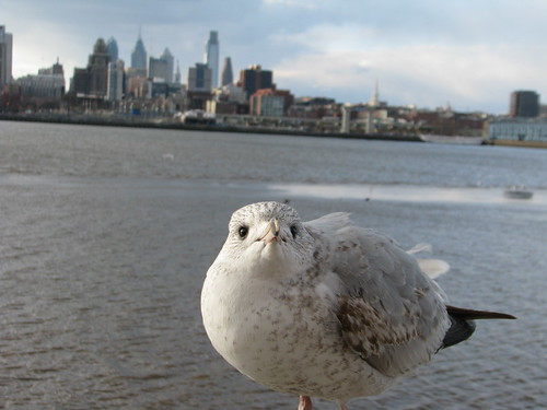 The cutest, posing-est seagull ever-Hello!