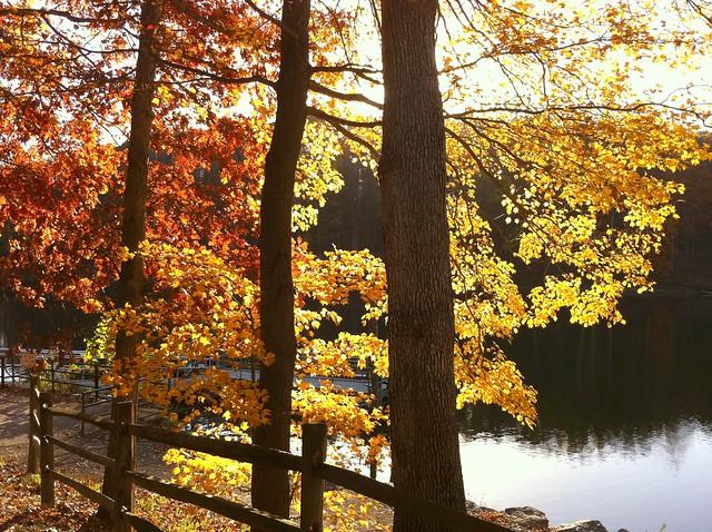 lake fence