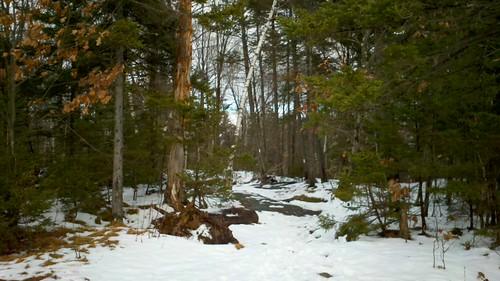prospect rock trail.jpg