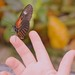 little hand has butterfly