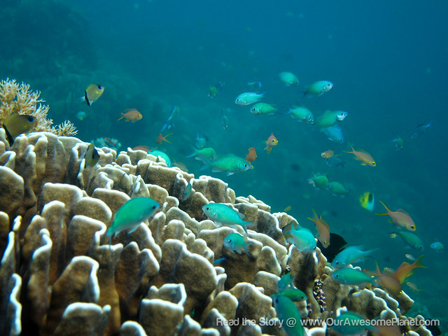 Diving in Sumilon (Photos by Aman)-8.jpg