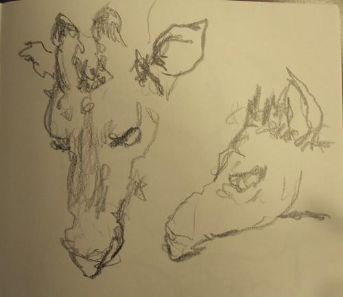 Giraffes by husdant