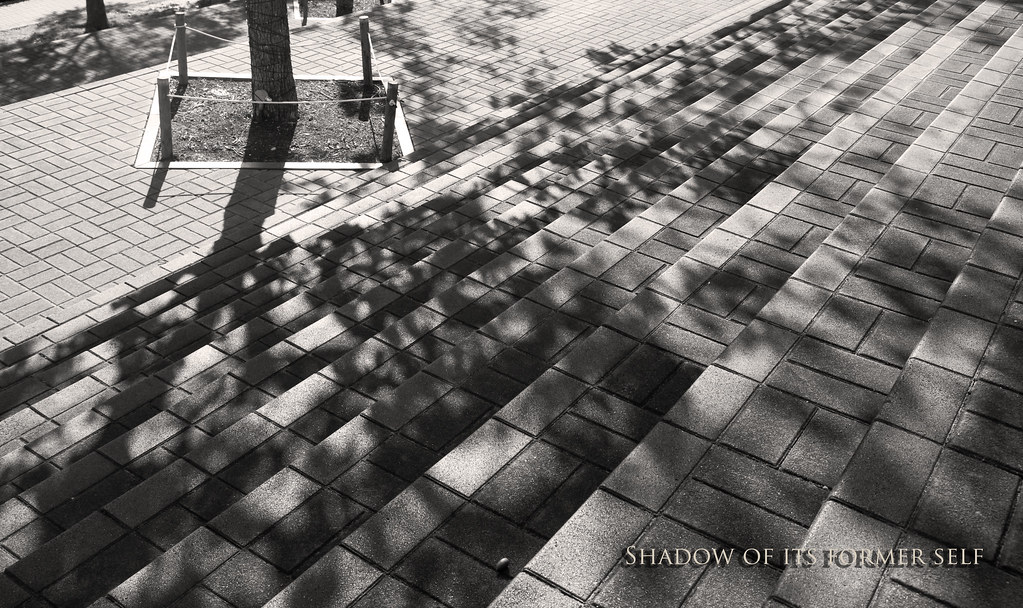 Light Within Shadow