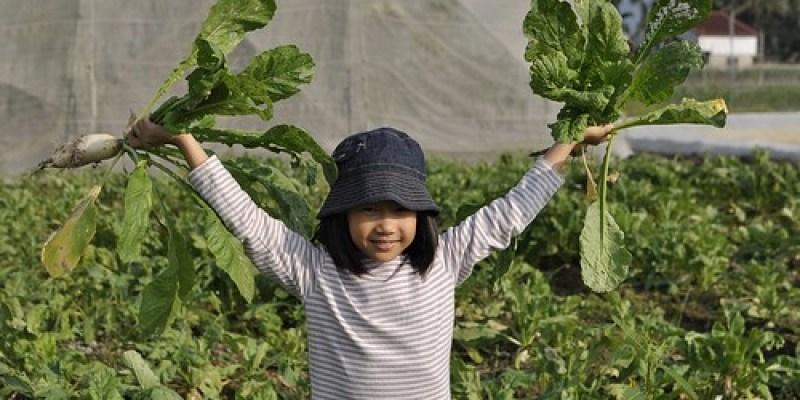 【Video】今年冬日美濃最後的白玉蘿蔔(7.4ys)