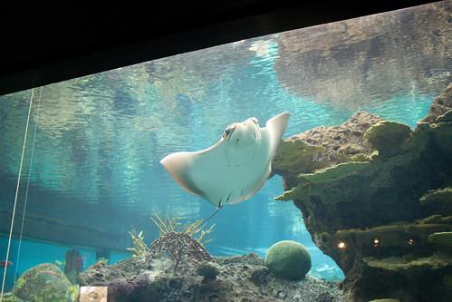 aquariumIMG_3673