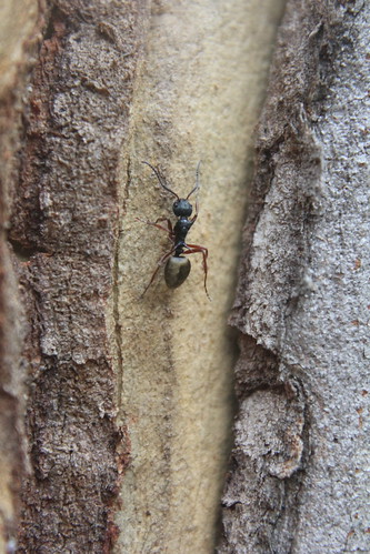 Ant escaping