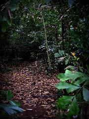 Overgrown staircase. Pulau Ubin