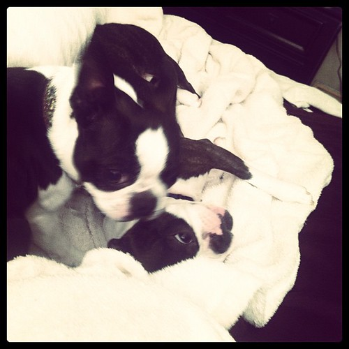 #janphotoaday Morning. I was part of a doggie wrestle pile this morning.