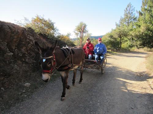 Railroad Grade on Mt Tam