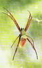 Arachnids of Guam