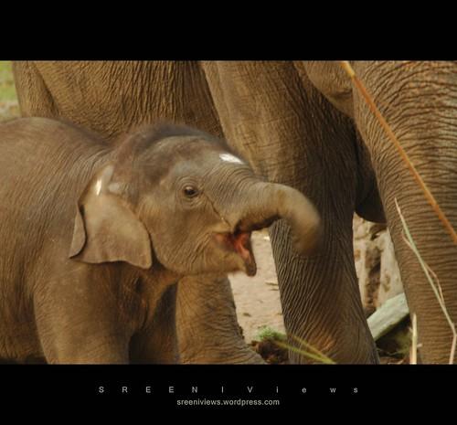 Bonding : Mother & Son elephants - Kaziranga