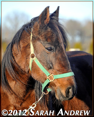 Jessica- available for adoption at Horse Rescue United