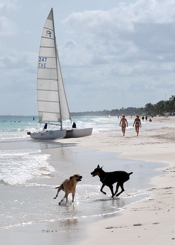 Tulum - Beach 26 - Beach dogs