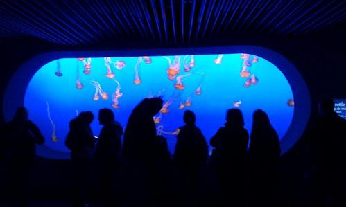 Jellyfish tank Monterey Bay Aquariou