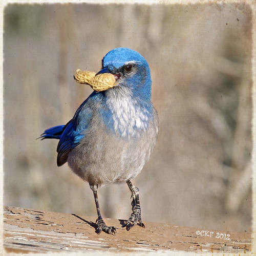 Avian Attitude