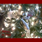Mikey in the Christmas tree