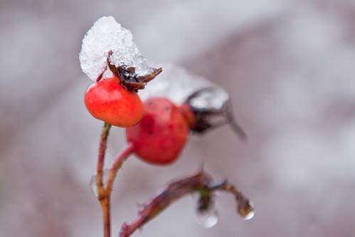 Snow2012-7