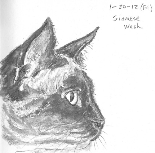 20120120_kitty_profile