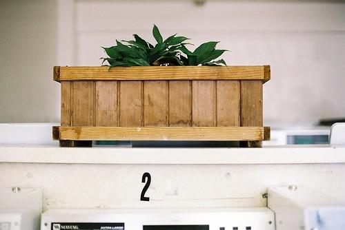 Laundromat plant 1