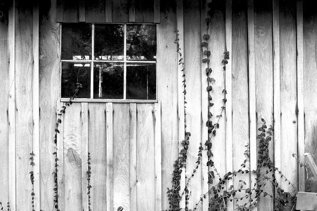 Creep at the Window