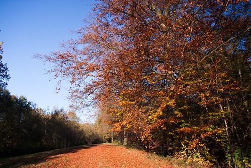 Autumn colors at Horst castle forest