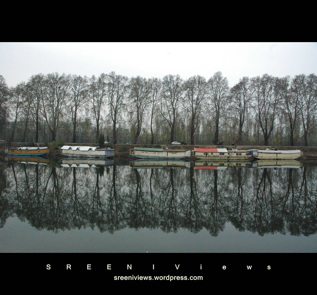 silhouette : nature's symmetry, Dal canal, Srinagar, India