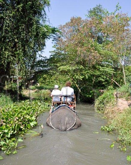 Bangkok - elefant trekking (1 of 1)-3
