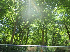 Photo of sun through trees made by Aaron from the car