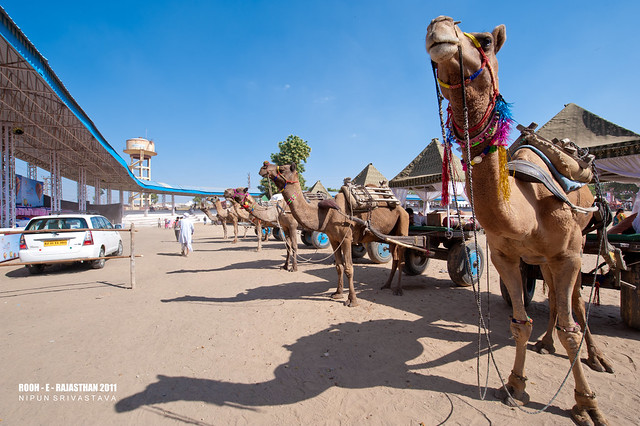 Pushkar Fair.