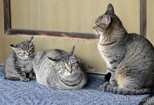 Cute cat family 猫家族