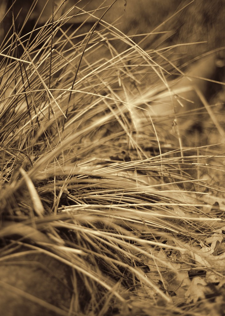 Grass in Sepia