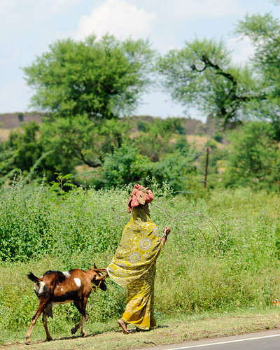The Goat, by Hameed Uddin With photo from Aditya