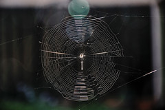 One Huge Spider Web