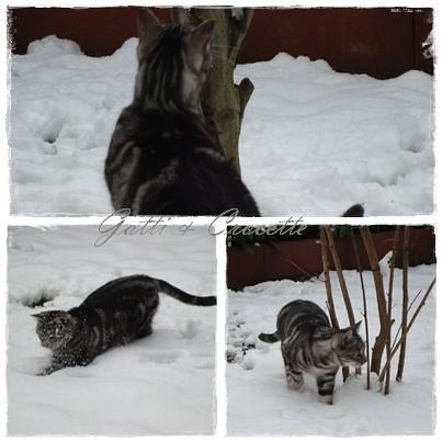 cody sulla neve2