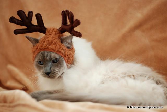 reindeerloto 12-8-2011 1-13-52 PM