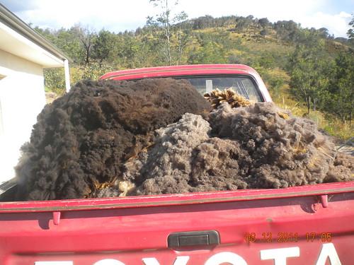 Ute load of fleece - 2011