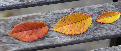 Leaves_b