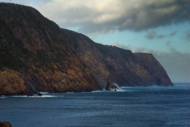 The cliffs of Logy Bay. The yellow on the rocks is lichen.