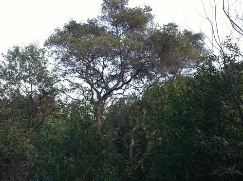 Tree silhouette dog park