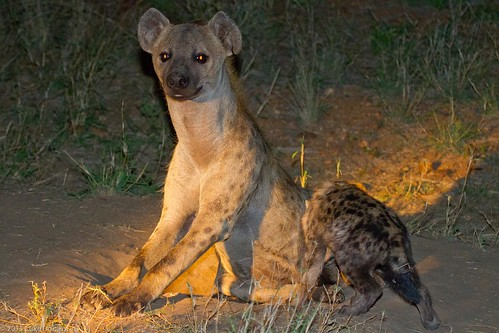 Hyena Mother and Cub