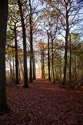Path in autumn glow
