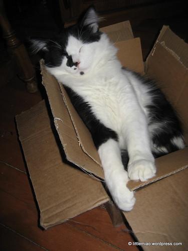 layerd boxes 1-1-2012 3-42-16 PM