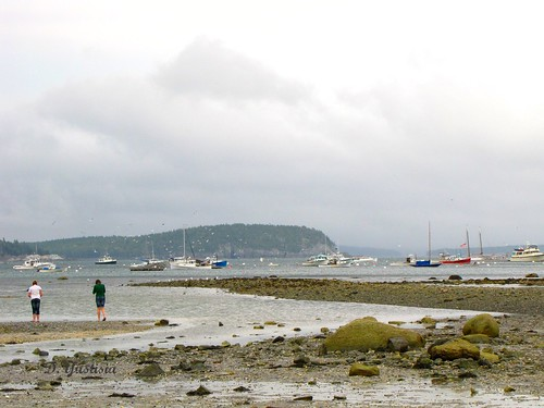 Low Tide in Bar Harbor