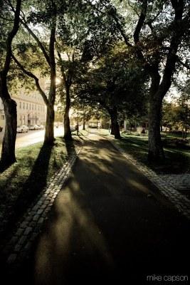 Saint John : King Square Greenery