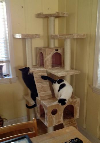 cathouse8