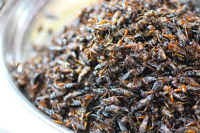 Siem Reap local market (crickets)