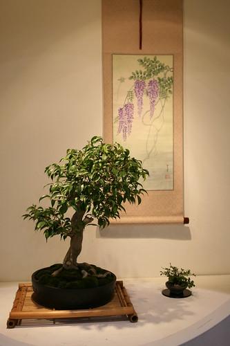 Bonsai and watercolor