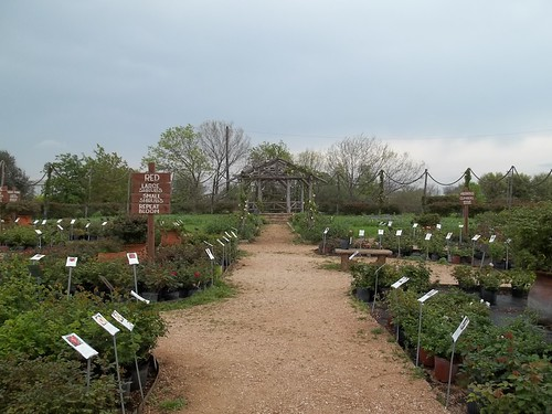 Antique Rose Emporium, San Antonio