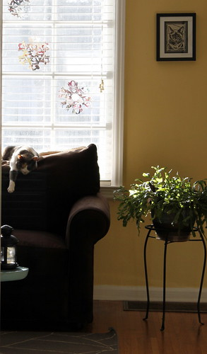 20120306. Around the house... Bean.
